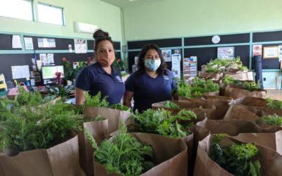 Botanical Community Development Initiative (BCDI)