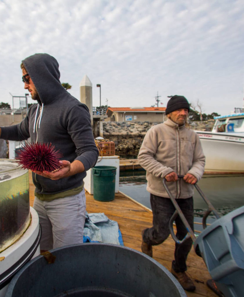Two men working on the fish pier, one holding a sea urchin and one pushing a big pale