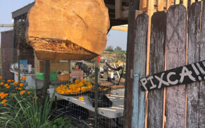 Pixca Farm