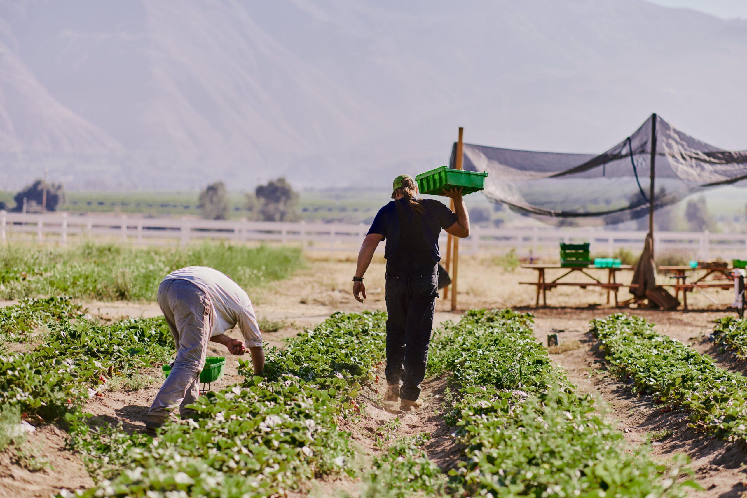 a man farming